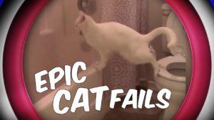 Epic Cat Fails